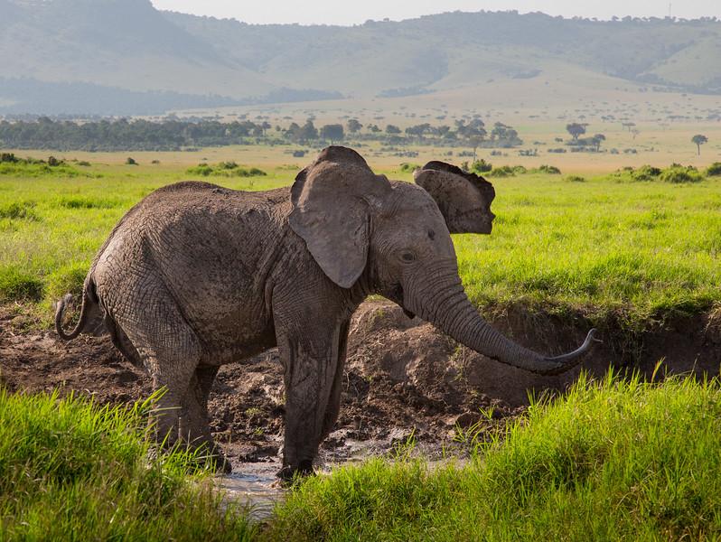 Maasai Mara-442