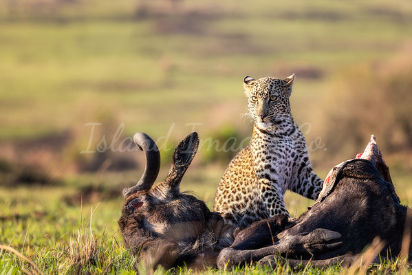 Cub and his meal 3