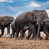 Wonderful Amboseli