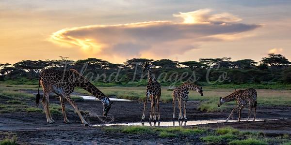 Giraffe party 1x2