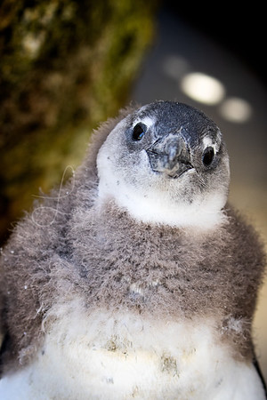 Baby Penguin book