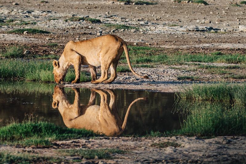 Africa-7