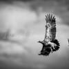 Eagles in the Sky