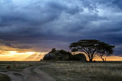 Acacia Tree and Kopje