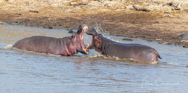 Hippo argument