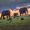 Elephants 1576