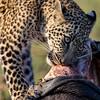 Leopard cub portrait 3