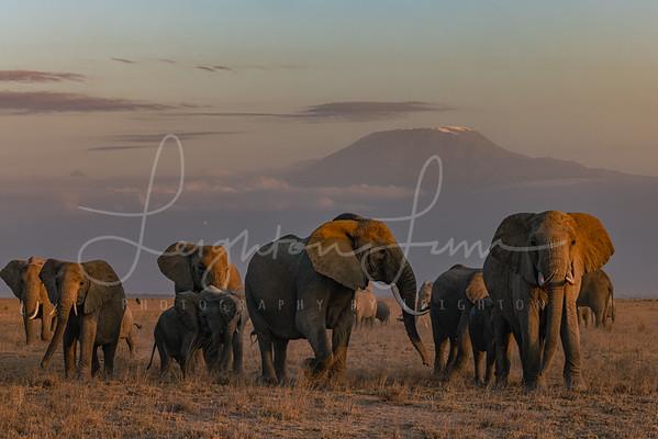 Dusk at Amboseli NP
