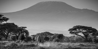 Lone ranger at Kilimanjaro