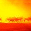 Silhouette of a running herd of Wildebeests throwing up dust at sunrise in Masai Mara Wildlife Refuge in Kenya