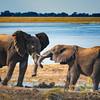 Botswanas Elephants