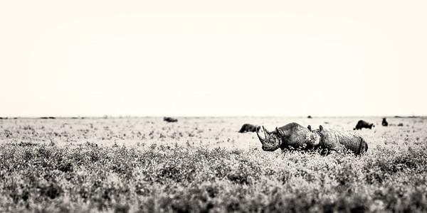 Black Rhino bnw 1x2