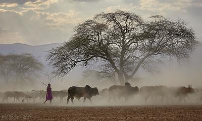 Masai Herder