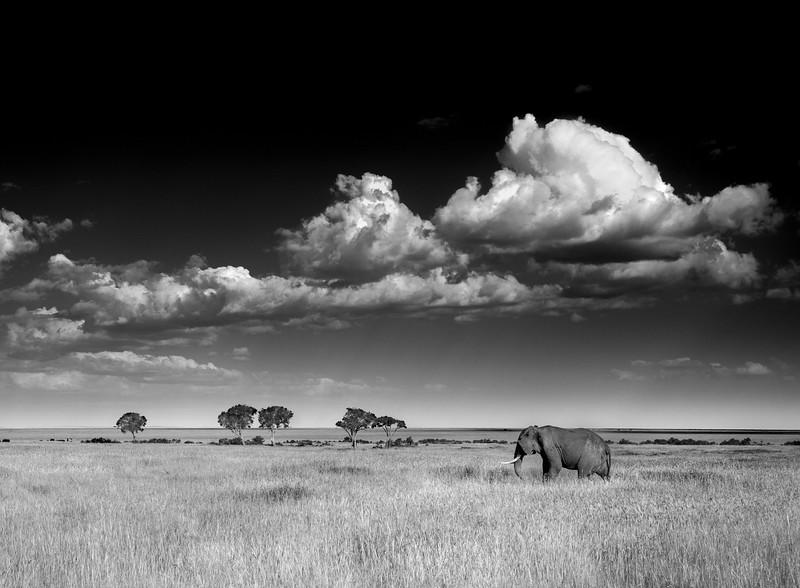 Maasai Mara-1338-Edit