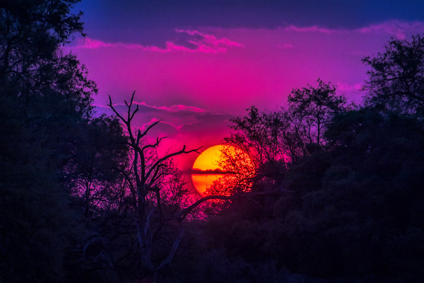 Hot pink sunset.  S Luangwa National Park