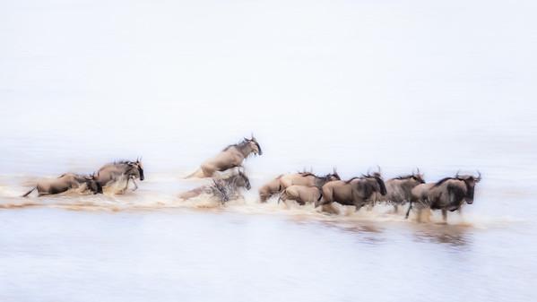Wildebeest Abstract