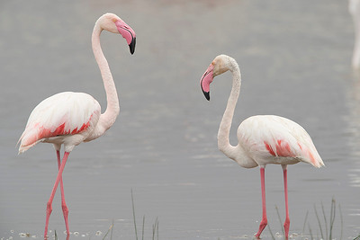 Flamingoes of Lake Nakuru