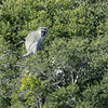 Vervet Monkey, South Africa
