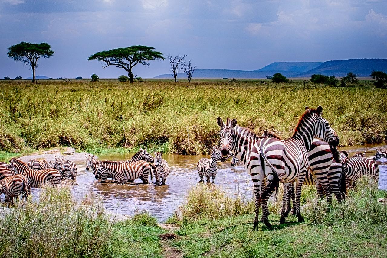 Zebra Bath 9833