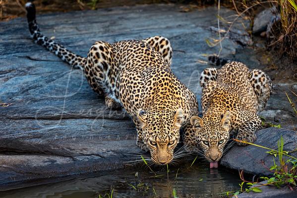 Leluka and cub