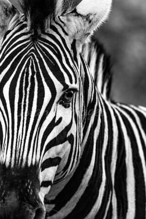 Eye for black and white