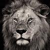 Black Rock Pride bnw portrait