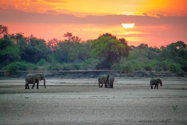 Elephant sunset.  S Luangwa National Park