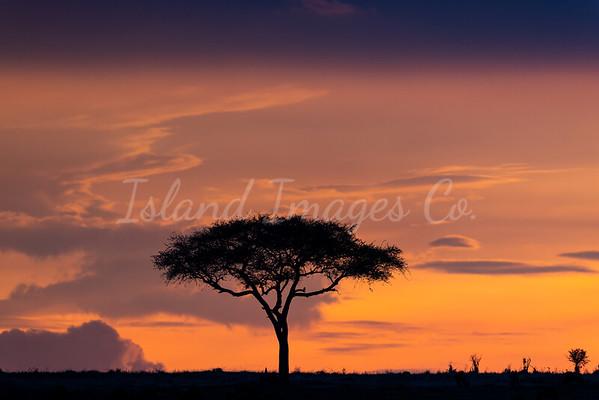 Typical Mara sunset