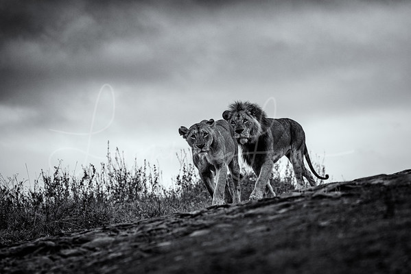 New King and Queen BNW