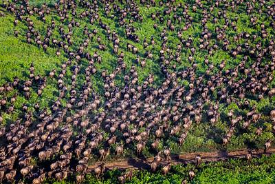 Huge Herd