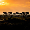 The March of the Elephants