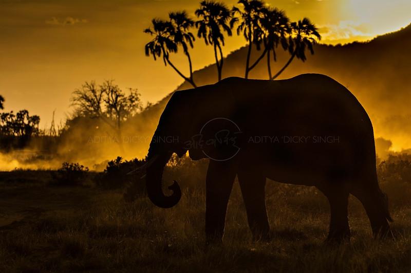 Backlit African elephant