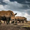 Low angle rhinos