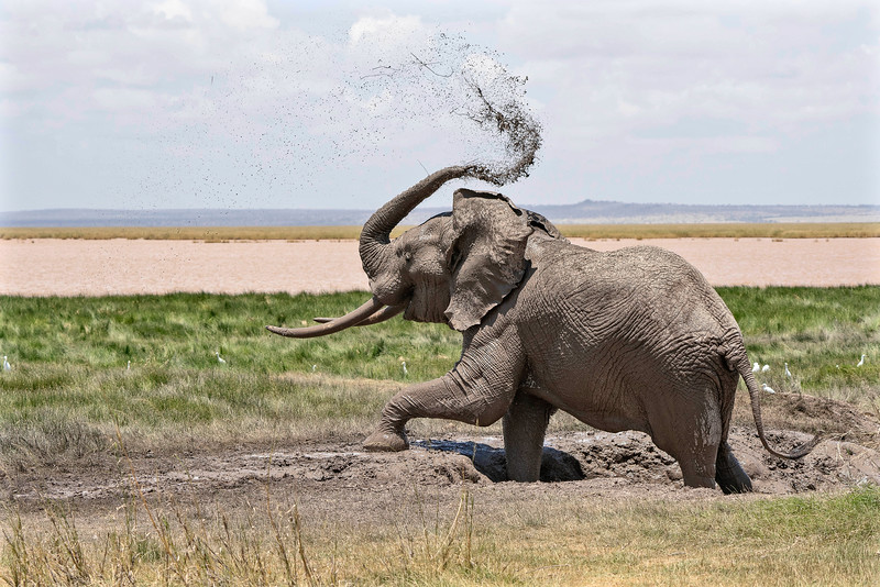A joyful time at the mud hole in Amboseli National Park