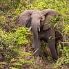 elephant 7284