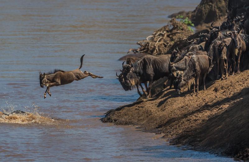 Migration River Crossing