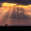 Last Mara sunrise
