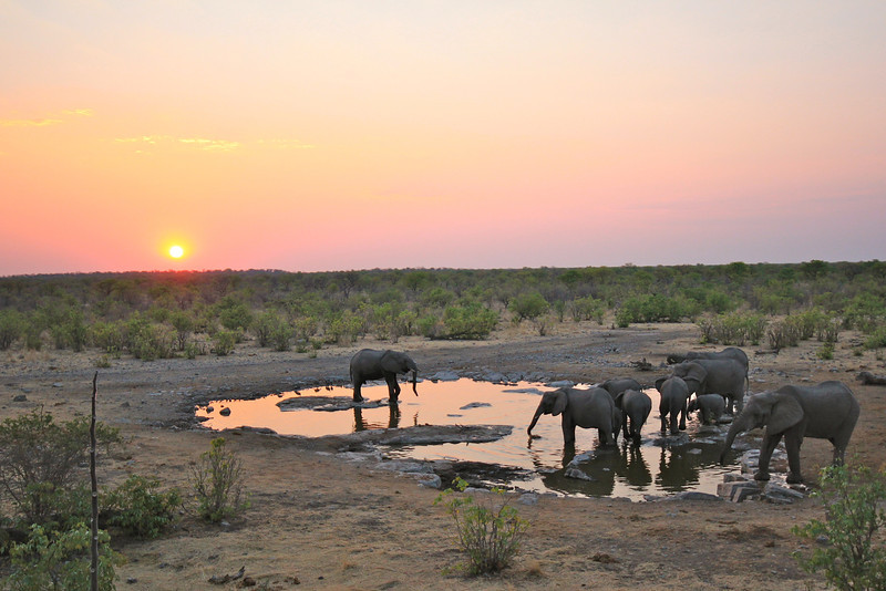 Halali waterhole at sunset