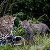 Mom and cub leopard