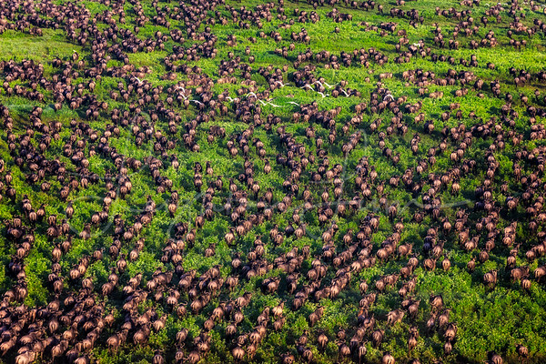 Great Migration aerial