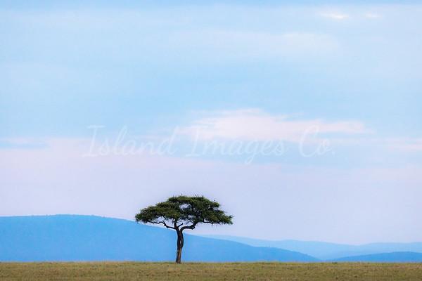 Mara Trees book-5592