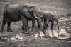 Elephants wearing golashes