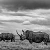 Rhino Fam