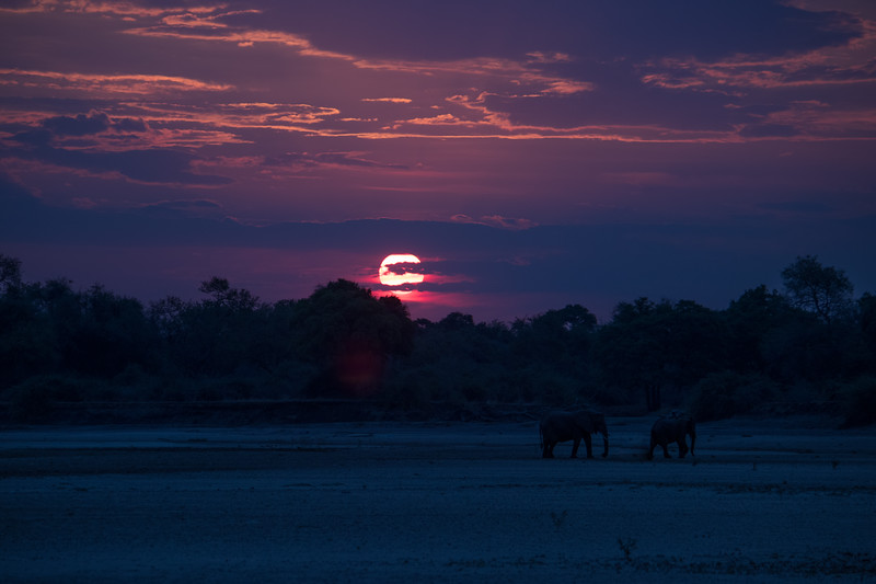 Two elephants at sunset.  S Luangwa National Park
