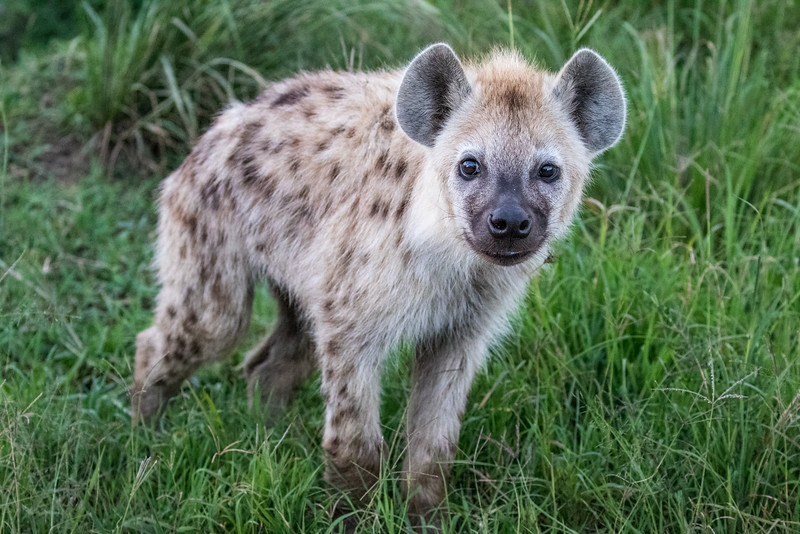 Maasai Mara-1326