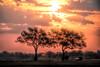 Ethereal safari.  S Luangwa National Park