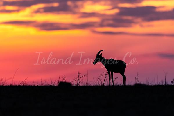 Mara sunset 2