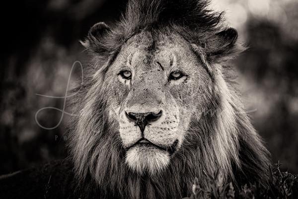 Kings Mood