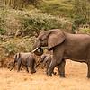 Elephant Family 7577