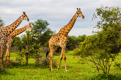 20170109_KrugerNationalPark_058